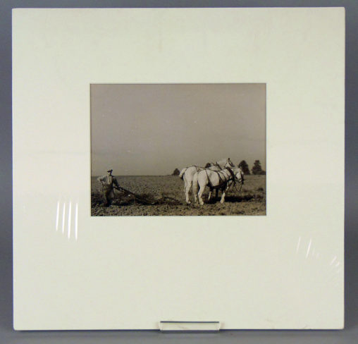 Two White Horses and a Ploughman